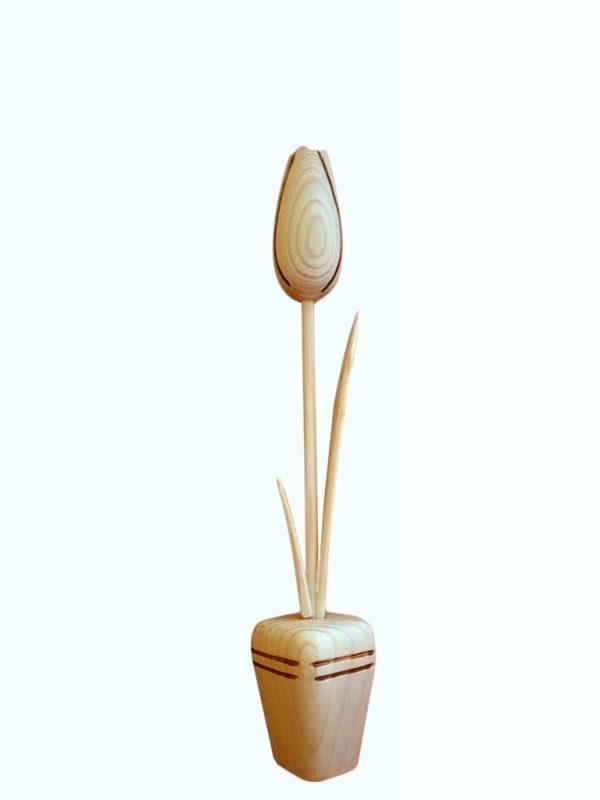 dreveny-kvet-tulipan